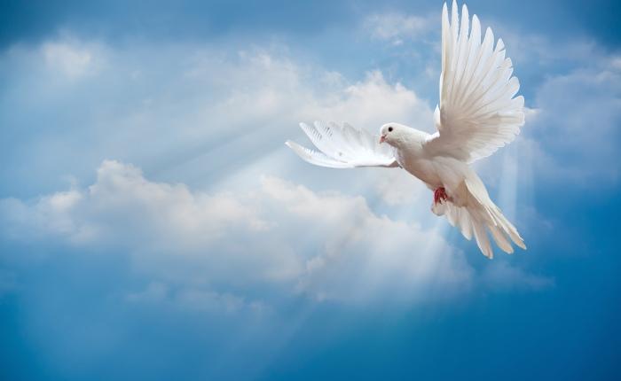 Precious Peace