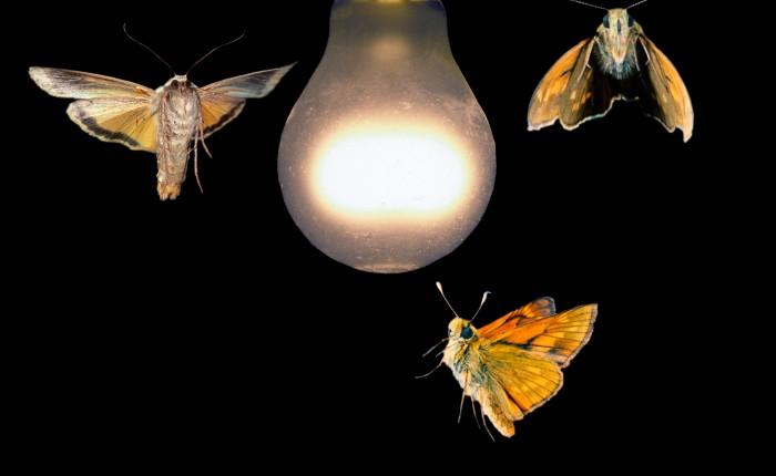 A Moth's Tale